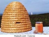 История возникновения пчелиного улья, виды ульев
