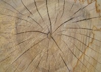 Словарь терминов в деревообработке