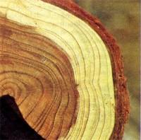 Эксплуатационные показатели древесины