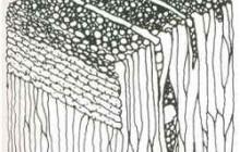 Структура и свойства дерева
